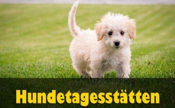 Hundetagesstätten